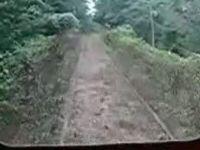 Train Tracks Disappear under Vegetation