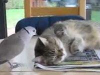 Bird Ruins Cat's Nap