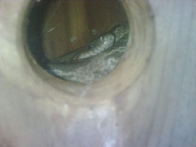 Surprise in a Birdhouse