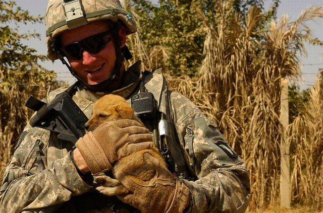 The Pets of Soldiers