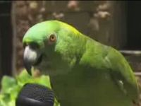 Parrot Can Sing Many Songs