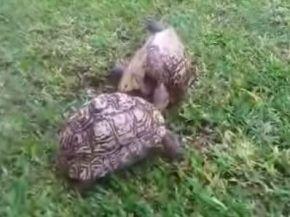 Turtle Roadside Assistance
