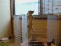 The Great Escape of the Kittens