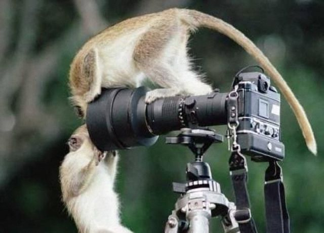 Funny Looking Photographers