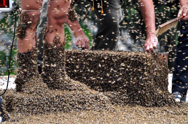 Bee Buzz Championship