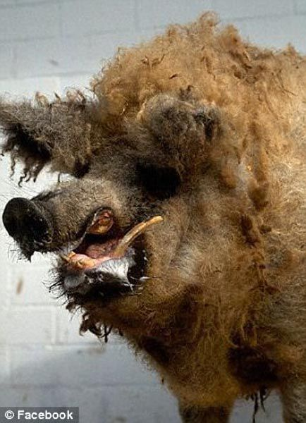 When Taxidermy Goes Wrong
