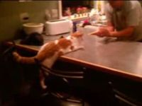 Smart Cat Plays Treat Game with Owner