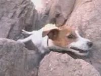 Awesome Rock Climbing Dog