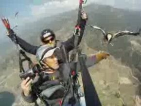 Parahawking Is Way Cooler than Paragliding