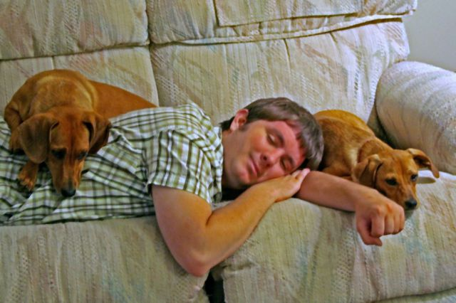 Napping With Pets