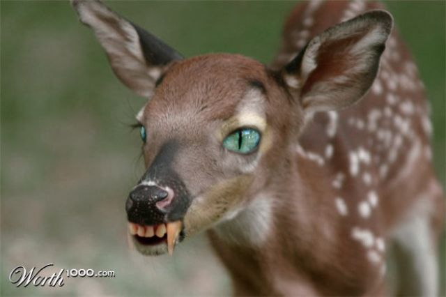 Freakish Animals