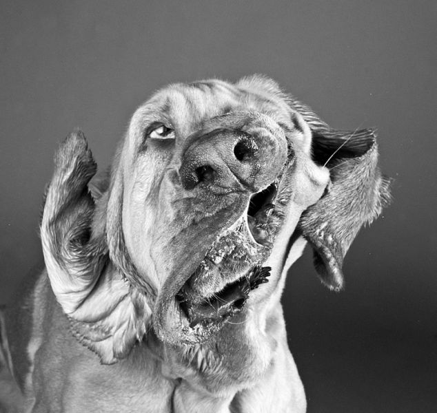 Funny Faces of Dogs Shaking Heads
