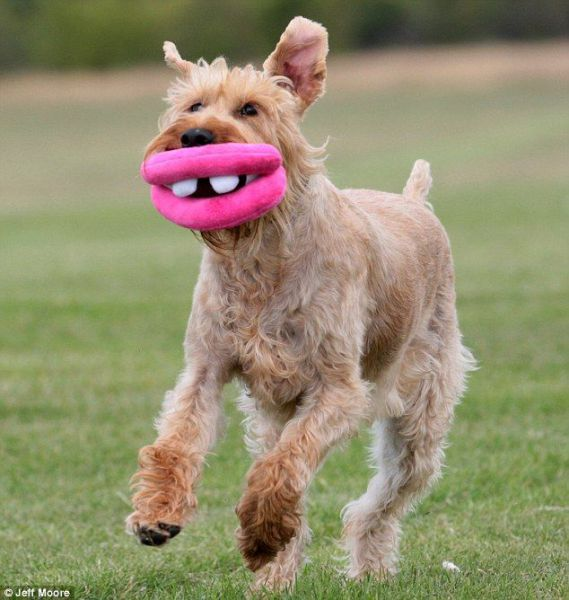 Amusing Toy for a Dog