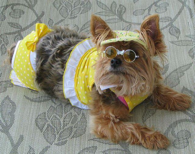 Cats and Dogs Wearing Bikinis