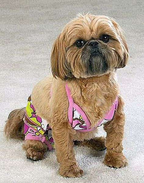 Cats and Dogs Wearing Bikinis