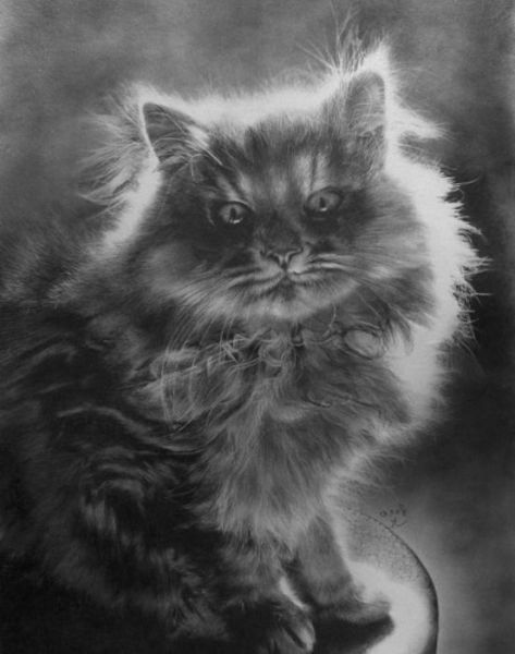 Lifelike Pencil Drawings