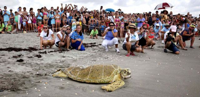 The Unusual Story of a Sea Turtle
