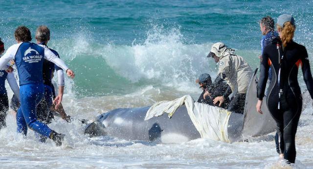 Saving a Whale