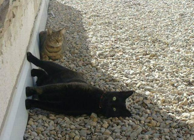 Cats do the Darnedest Things