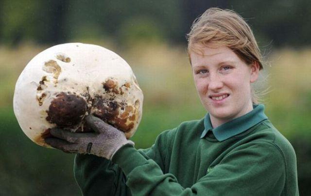 A Huge Mushroom