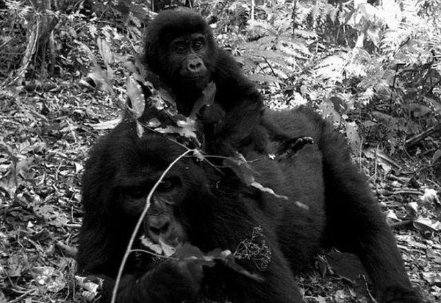Hidden Camera Animal Photographs