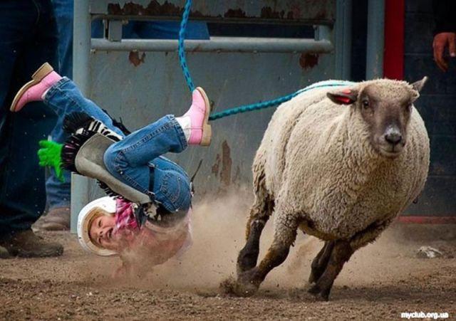 Sheep Getting Revenge on Obnoxious Children