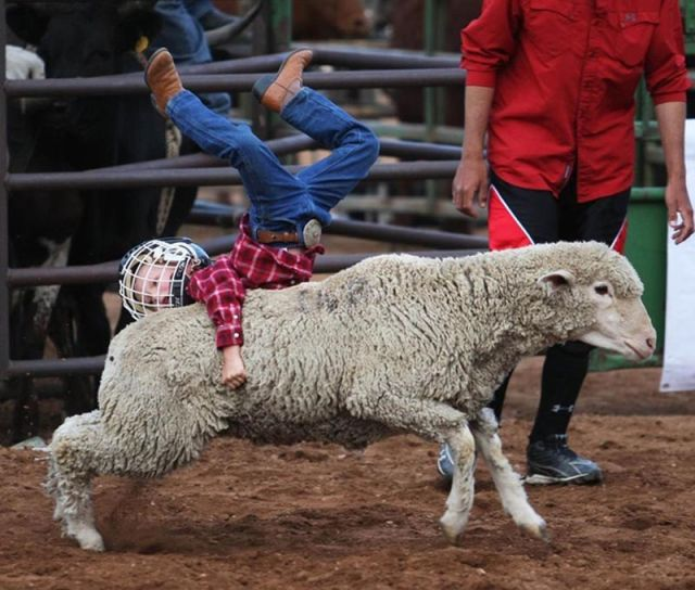 Sheep Getting Revenge on Obnoxious Children