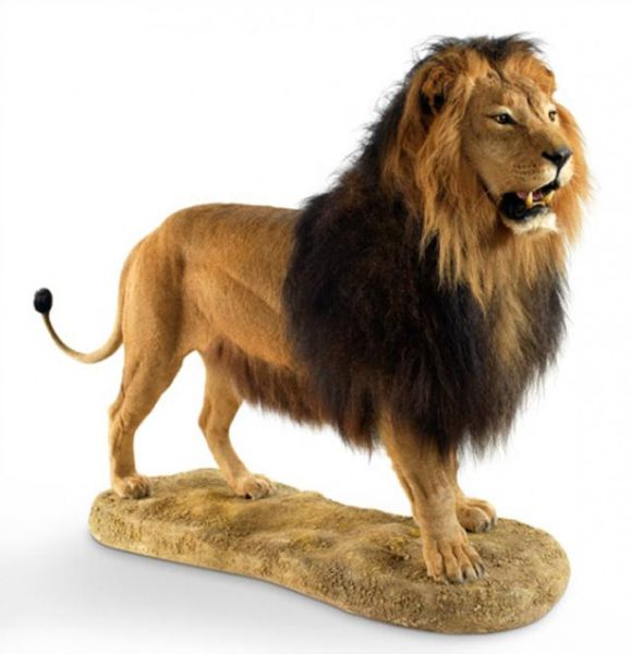 A Gift to a Swedish King: A Stuffed Lion