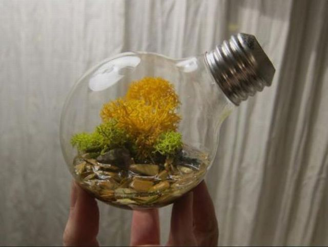 Amazing Light Bulb Planters