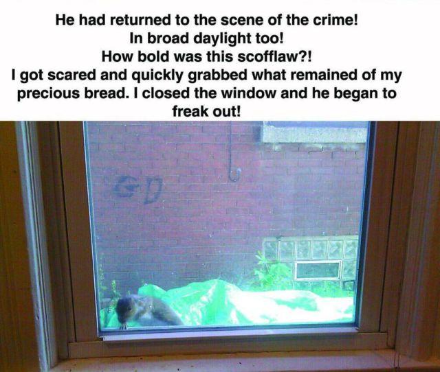 Scandalous Attempted Burglary