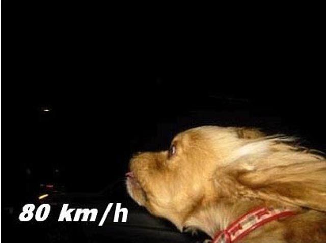 Doggy Likes High Speed