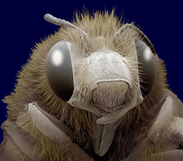 Close Ups of Insects in 3D