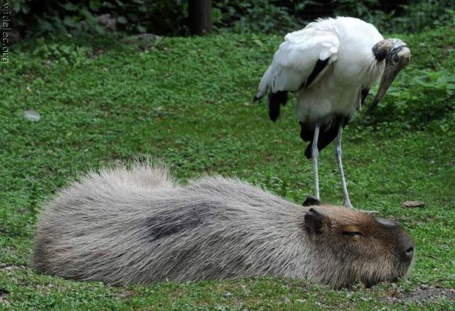Funny Animal Couples