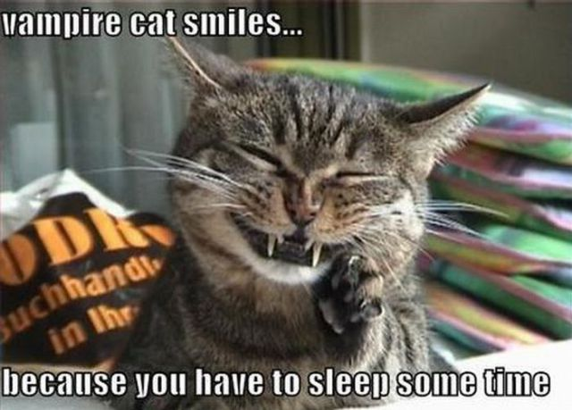 http://img.izismile.com/img/img4/20110830/640/the_best_of_lol_cats_640_15.jpg