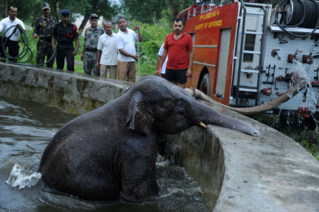 Rescue Operation for Baby Elephant