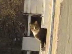 Amazing Parkour Cat