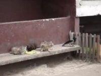 Bird Steals Cats' Food