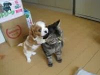 Cuteness Overload: Puppy Loves Cat