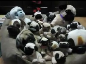 Can You Find the Real Pug?
