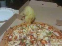 Duck Loves Eating Pizza