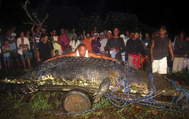Giant Crocodile Captured in Philippines ‎