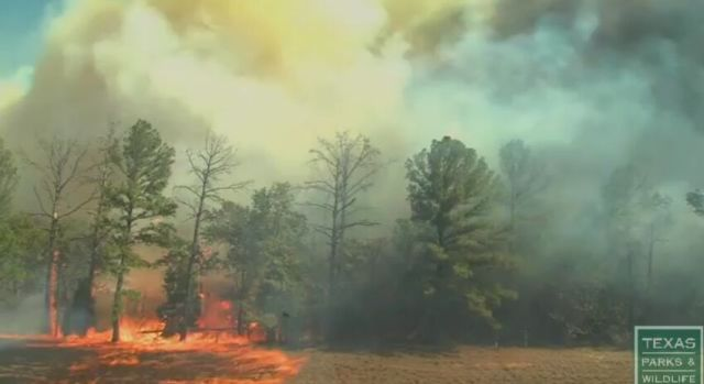 See How Fast Wildfires Spread [VIDEO]