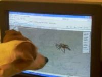 Dog vs Virtual Spider