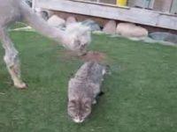 Alpaca Loves Kitten