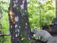 Squirrel Trolls Cat