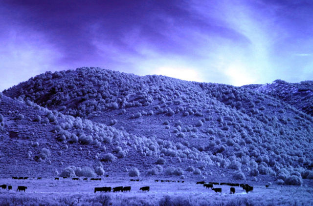 Mind Blowing Infrared Photography