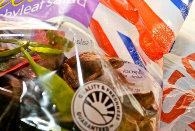 What You Can Find in a Bag of Salad