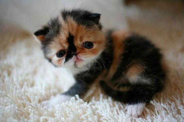 The Sweetest Kitten Ever