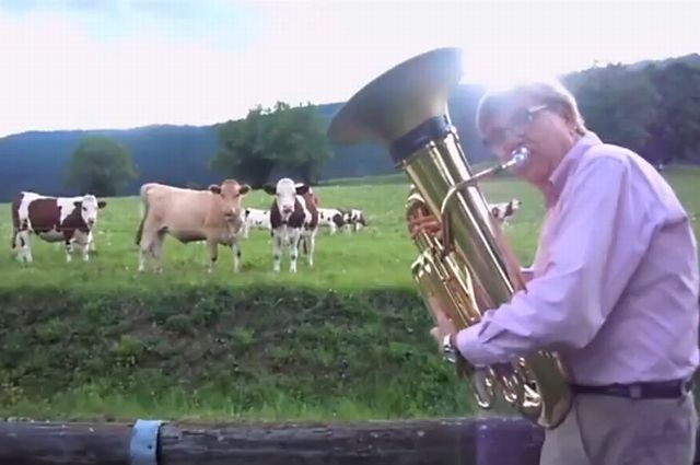 Do You Love Jazz as Much as Cows Love It? [VIDEO]