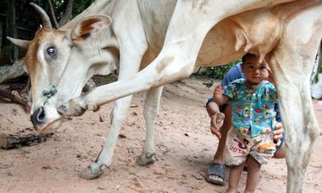 Milk Directly from the Milk Producer